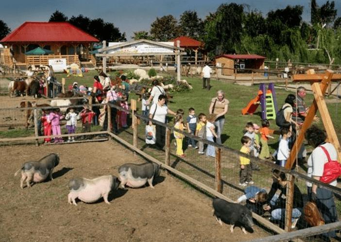 Jocuri cu ferme de vaci online dating