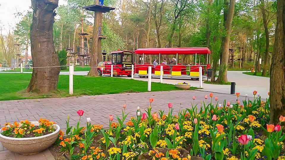 Parcuri de aventura Bucuresti Comana trenulet flori