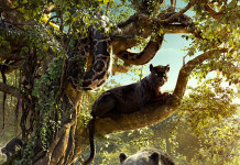 the jungle book film copii