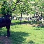 Parcul Carol cai jandarmi