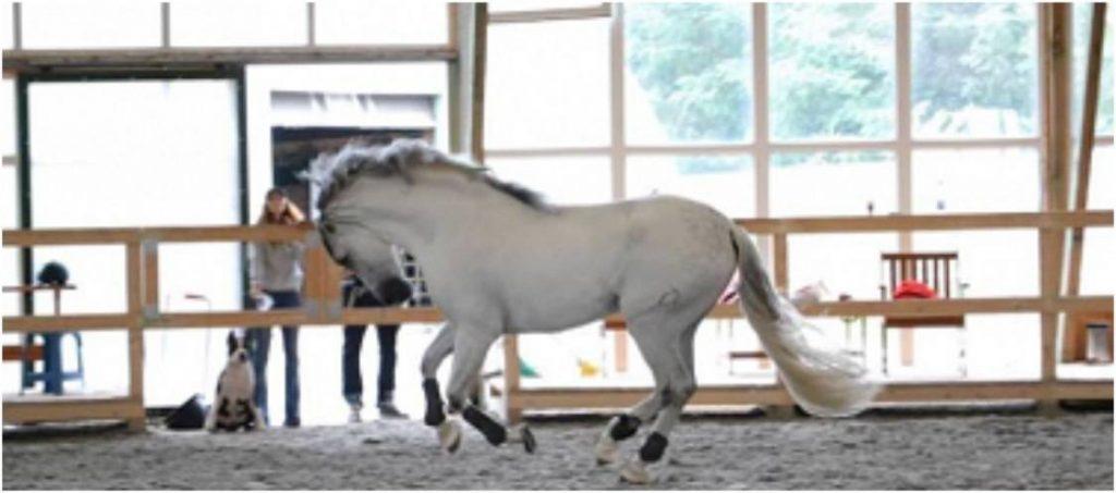 Excursii Cool in Familie la Mai Puţin de 100 km de Bucuresti cal alb