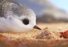 Piper, Un Nou Scurmetraj Animat Online de la Disney Pixar