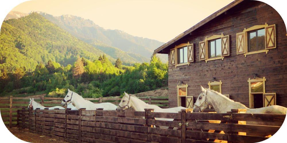 Excursii în Familie la Cai Maggie's Ranch