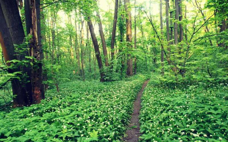 Păduri Bucureşti Padurea Baneasa