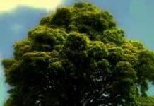 Omul Cel Bun și Stejarul Tinereții. Poveste pentru Copii de Armina Flavia Adam