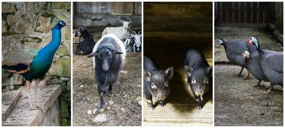 Excursii de weekend Bucuresti Ferma Club animale