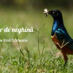 Cat un fir de neghina. Poveste de Emil Garleanu gokid fb